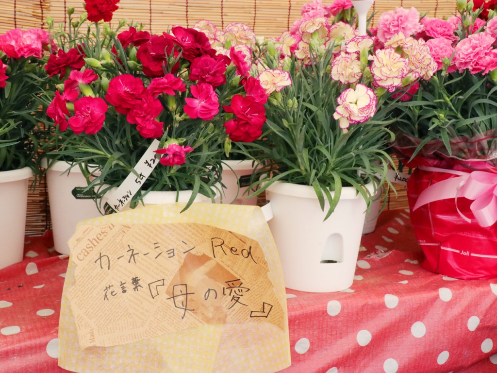 【テント写真】カーネ01